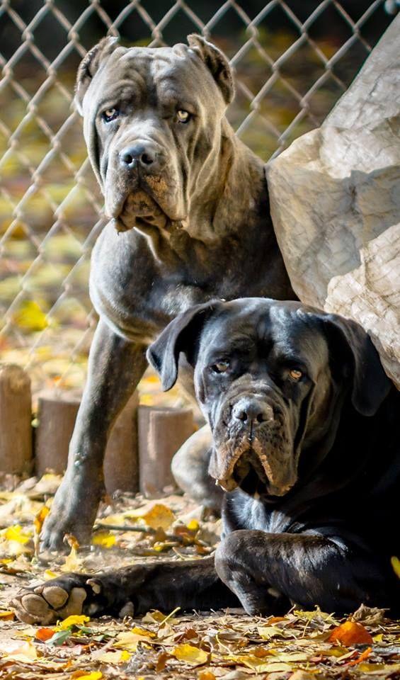 Pin On Pavlos Dog