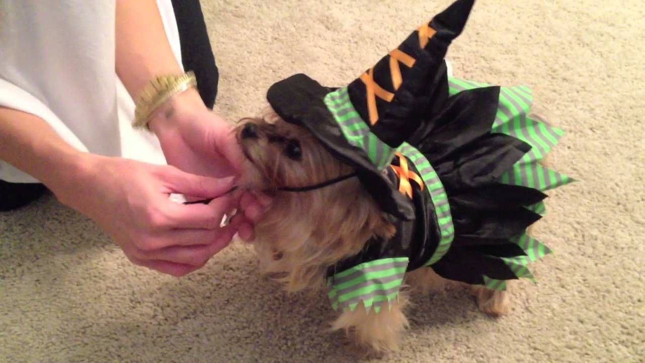 Brie's Cute Halloween Dog Costumes