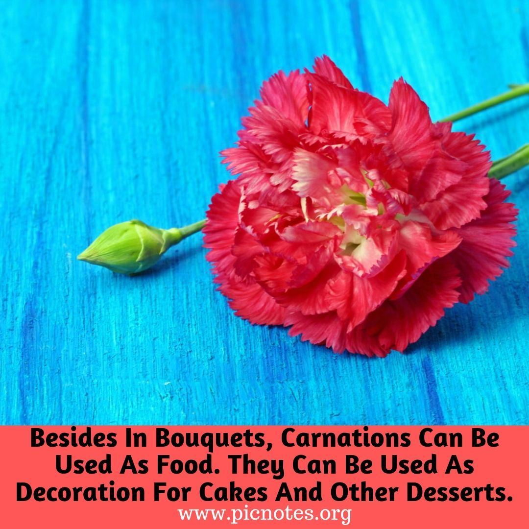 Carnations Plant Lover Herbaceous Perennials Carnation Flower