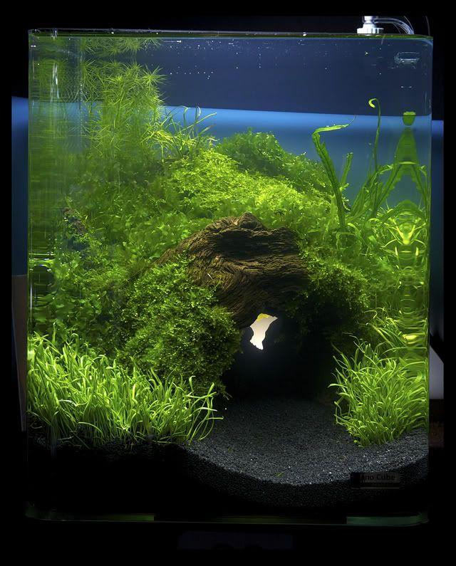Freshwater Aquascape.