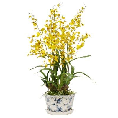 Jane Seymour Botanicals Rose Trellis Oncidium Orchid