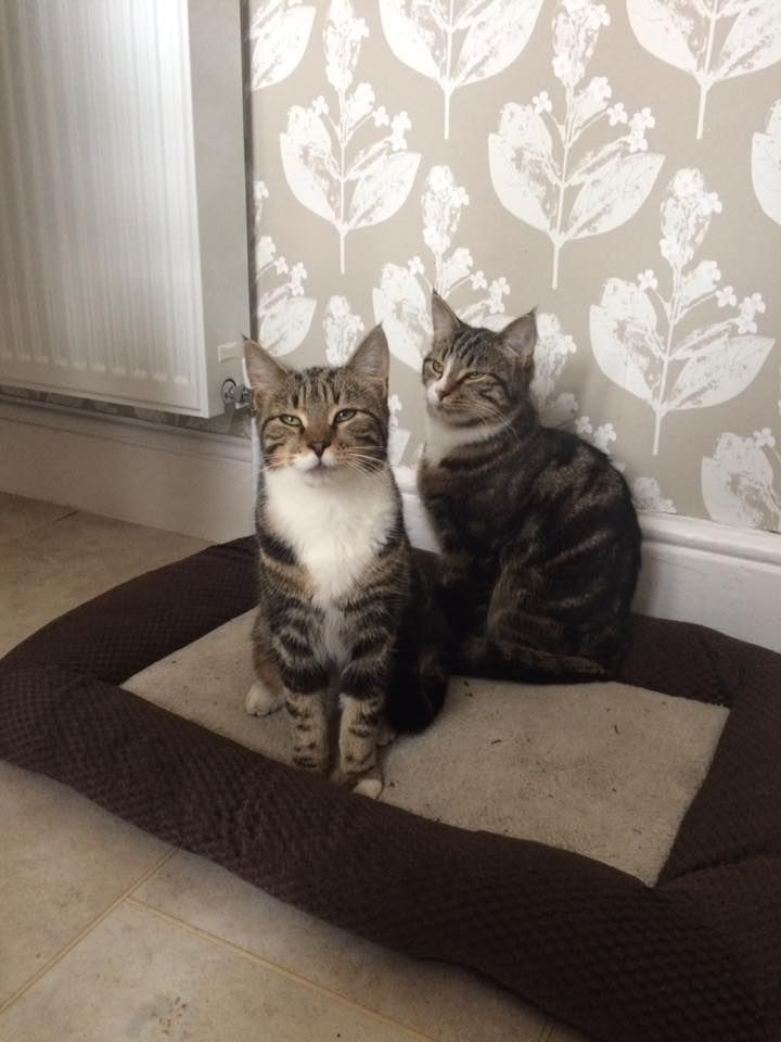Cali and Leo who i provided cat sitting for over the Easter Bank Holiday