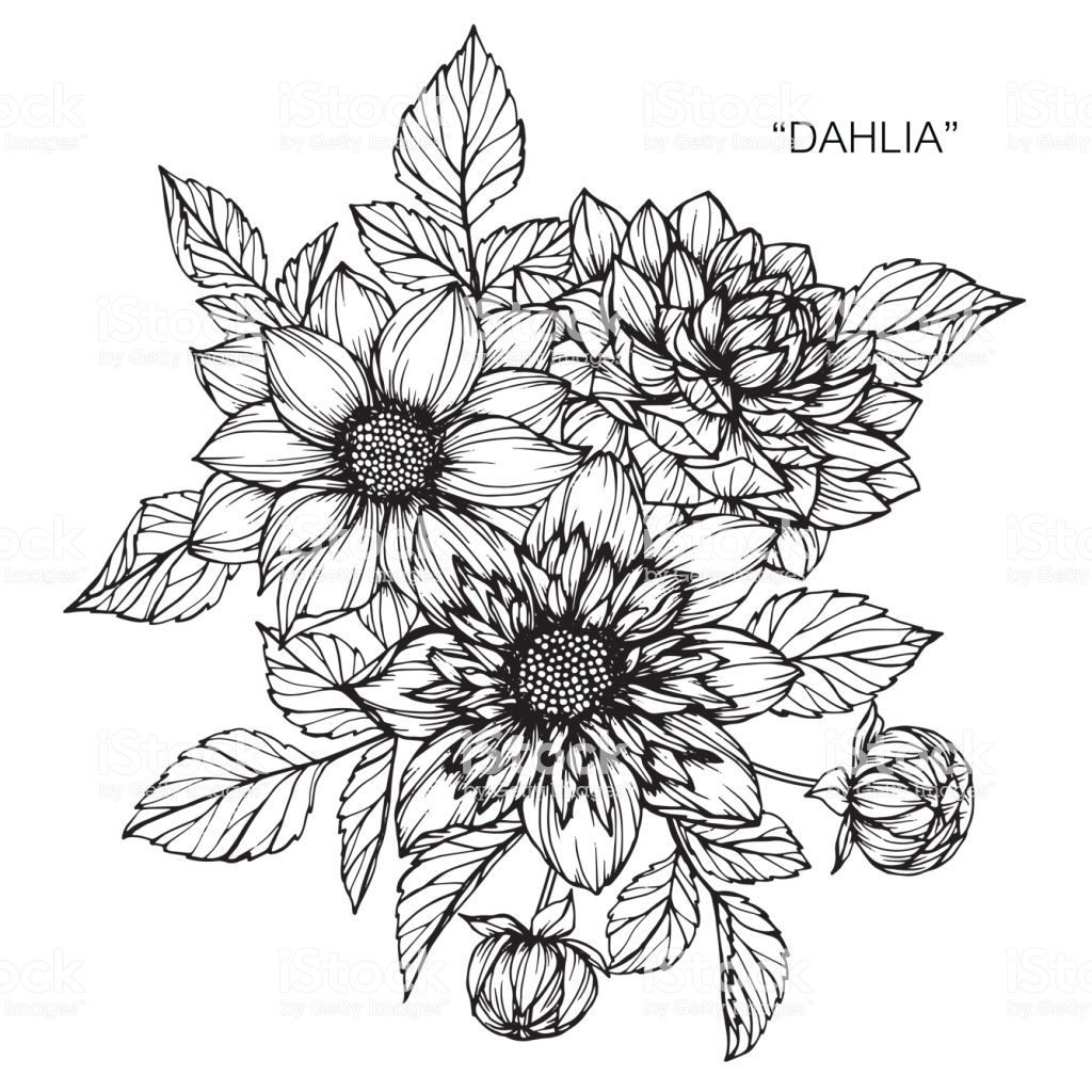 Black And White Flower png download - 800*800 - Free Transparent Dahlia png  Download. - CleanPNG / KissPNG