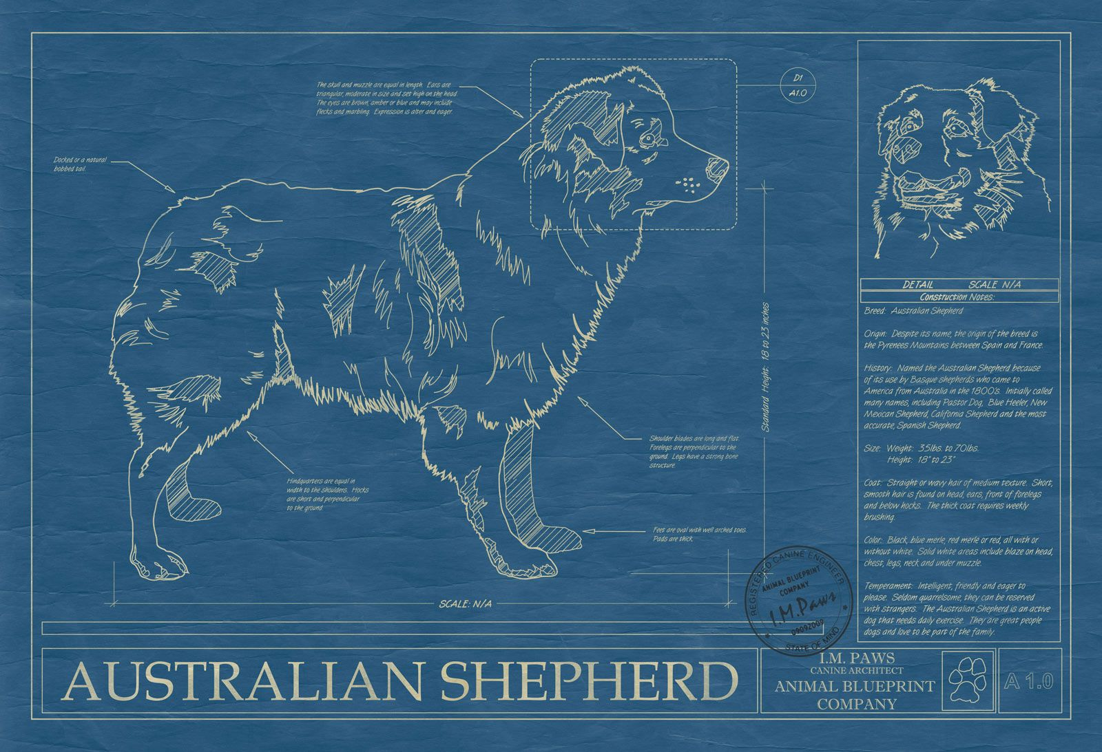 Australian shepherd blueprint arsenal pinterest australian animal blueprint co malvernweather Image collections