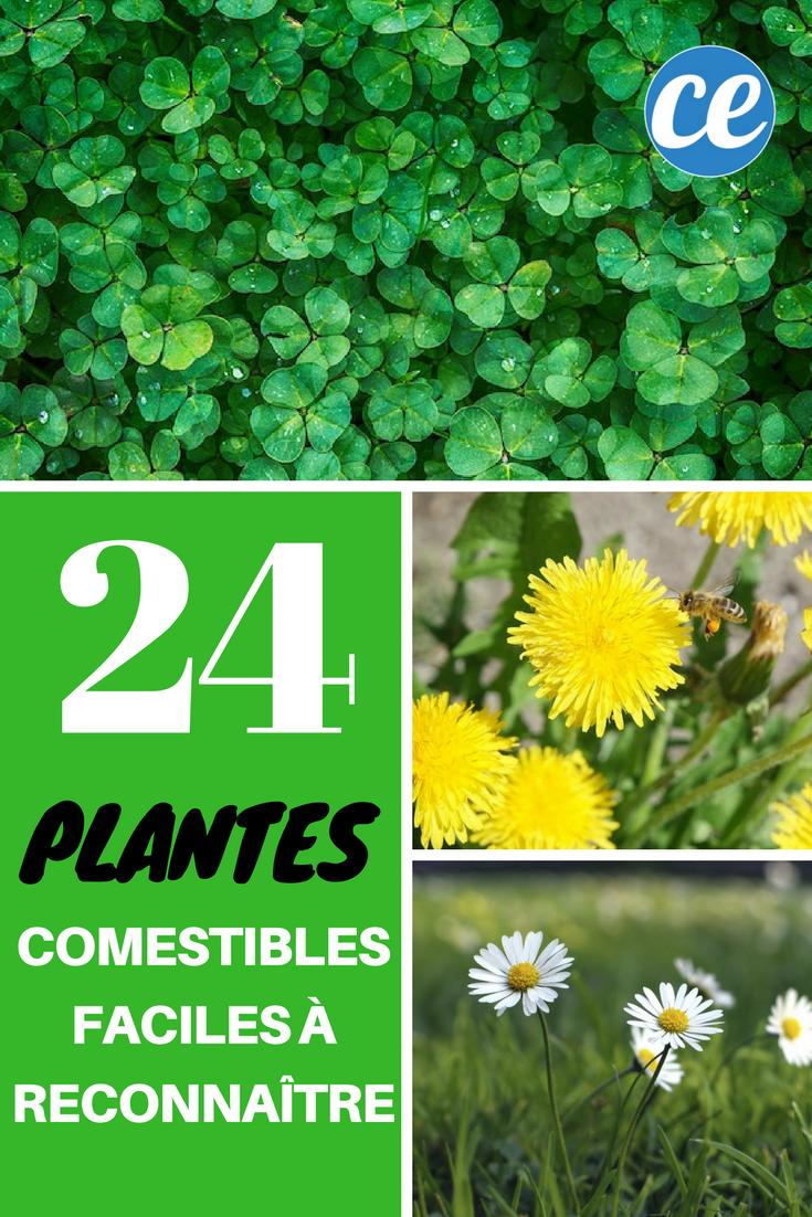 24 Plantes Comestibles Faciles A Reconnaitre Plantes Comestibles Plantes Sauvages Comestibles Plantes Sauvages
