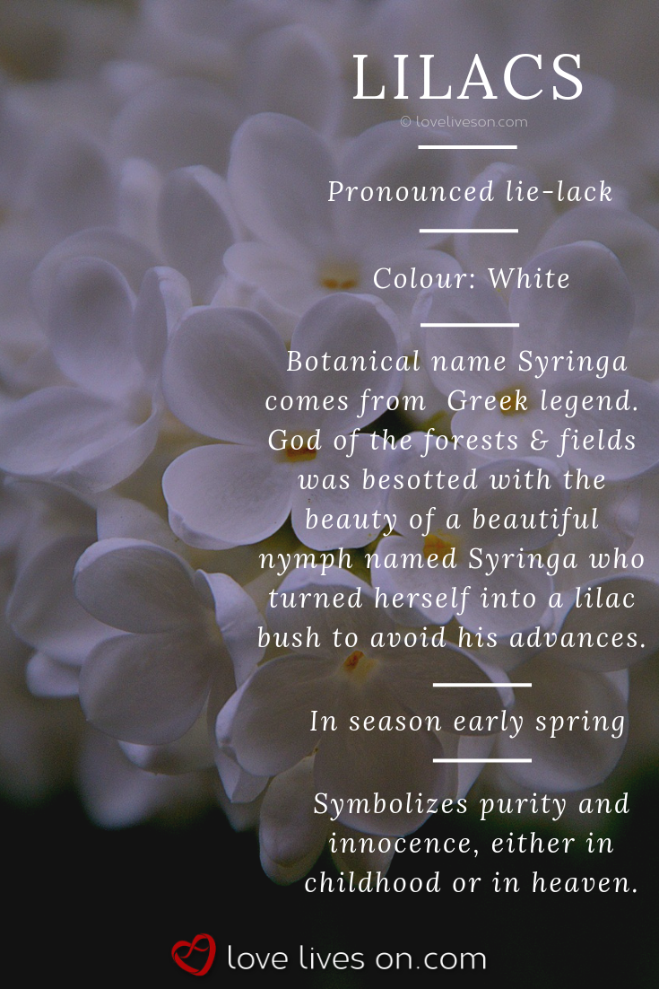 White Lilac Meaning White Lilacs Symbolize Purity Innocence Either In Childhood Or Heaven Making It A Per Funeral Flowers Flower Meanings Flower Aesthetic