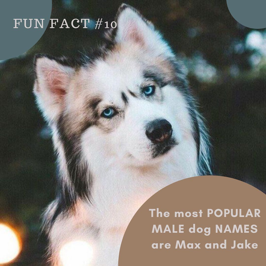 Dogs Wear Glasses On Instagram Fun Fact 10 The Most Popular Name For A Male Dog Are Max And Jake Other Popular Na In 2020 Dog Wear Popular Male Dog Names Dog Facts