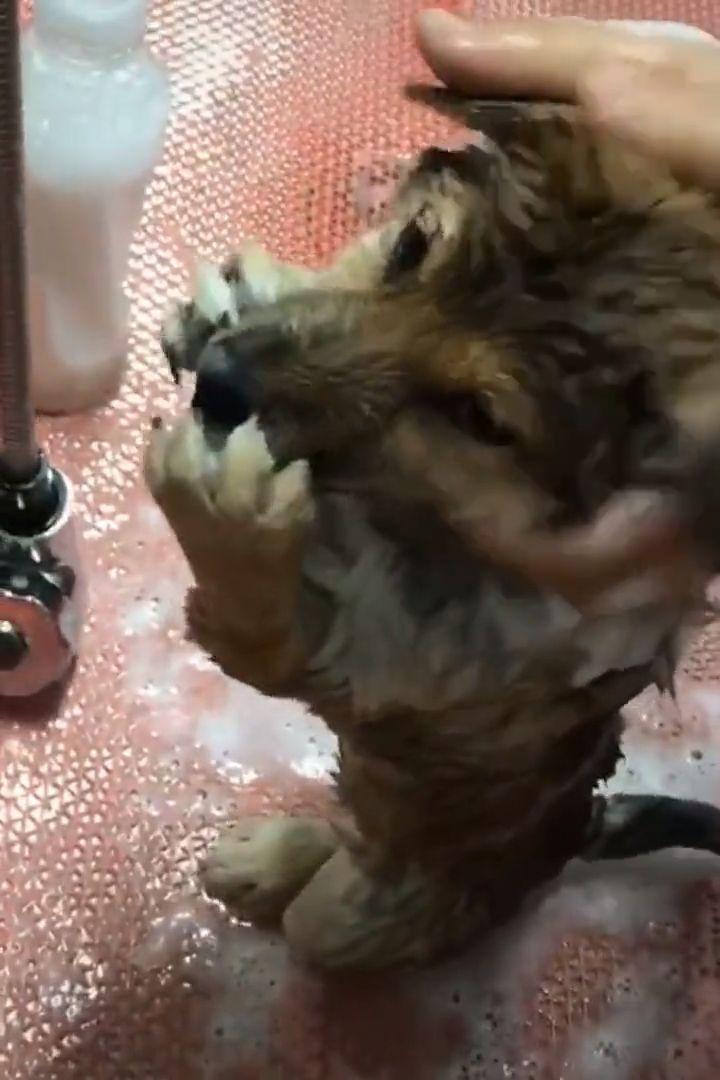 Não coloque o líquido do banho na minha boca 🐶😂😁   - Tiere -