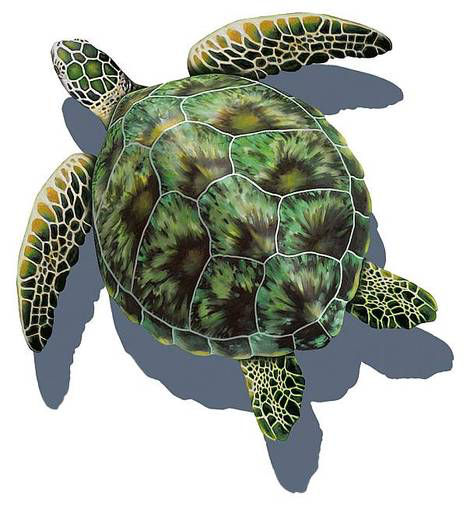 Sea Turtle Shadow Swimming Pool Mosaic Tile Sea Turtle Art Sea Turtle Pictures Sea Turtle Tattoo