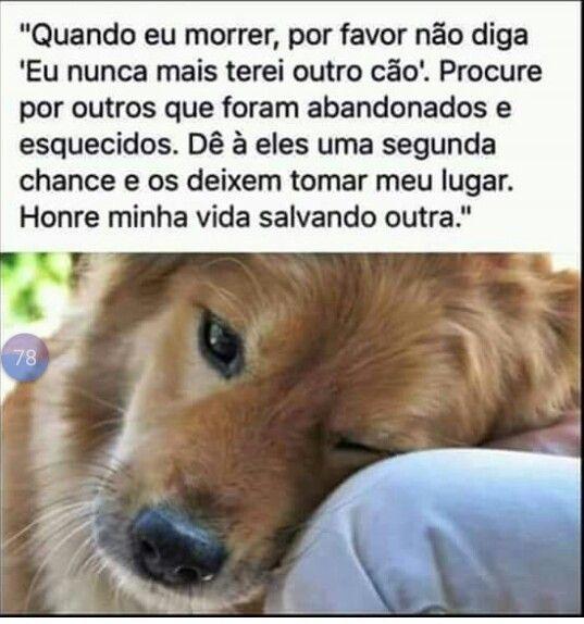Vdd Muito Lindooooo Animals Animais Animais Fofos E Hospital