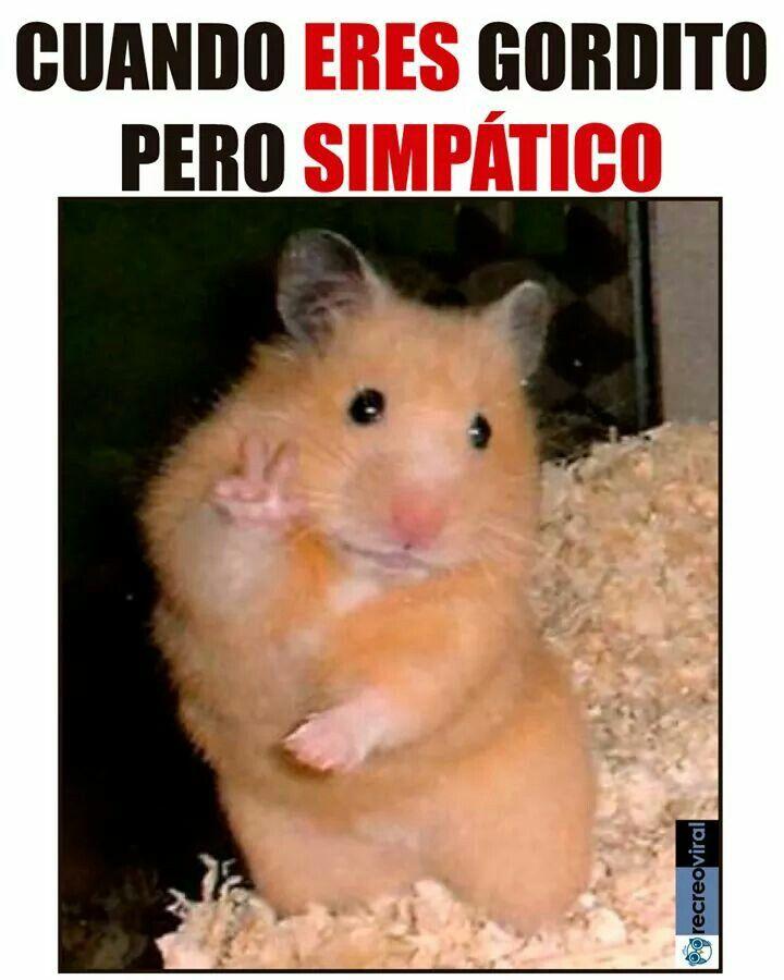 Pin By Glenda On Para Reir Un Ratito Funny Animal Quotes Cute Hamsters Animal Jokes