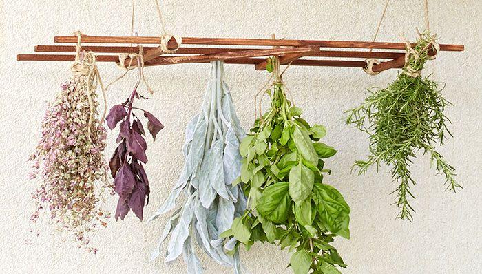 Hanging Herb Drying Rack Herb Drying Racks Hanging Herb Gardens Hanging Herbs