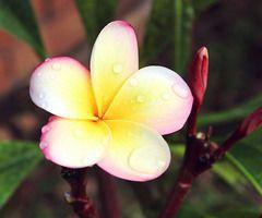Flickr: Elena