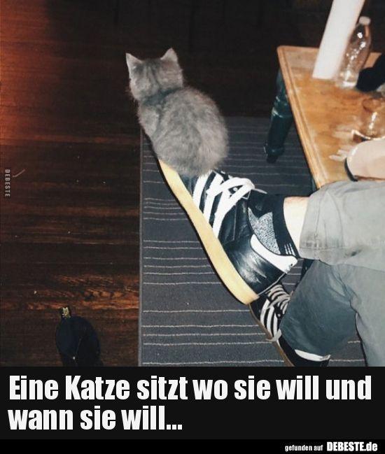 Eine Katze sitzt wo sie will und wann sie will... #funnypictures