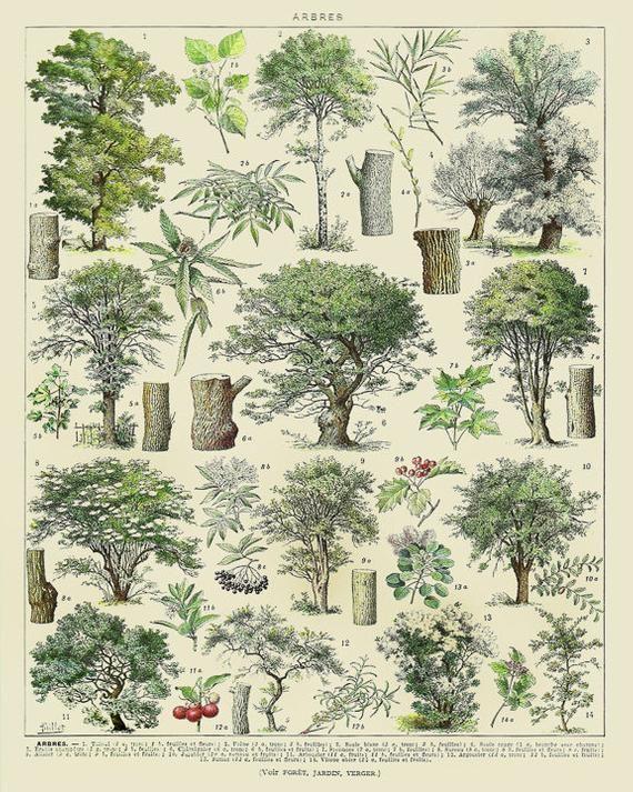 Vintage Tree Print, French Tree Chart Botanical Pr