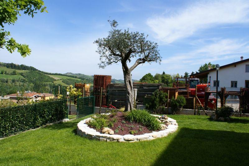 Ulivo aiuola cerca con google garden pinterest - Giardino con ulivi ...