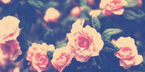 Cute flower header | Flower header, Cute twitter headers ...
