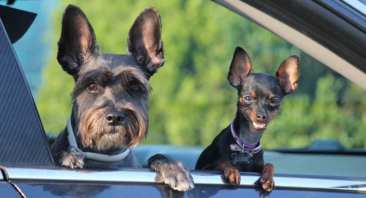 Traditional dog training versus modern methods puppy