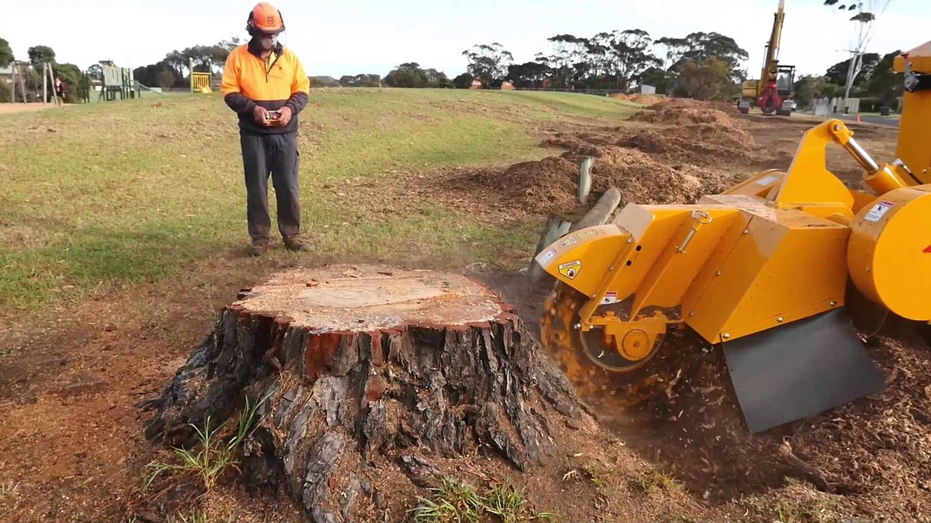 A #Treestump Is The Small Portion Of The Trunk Connected
