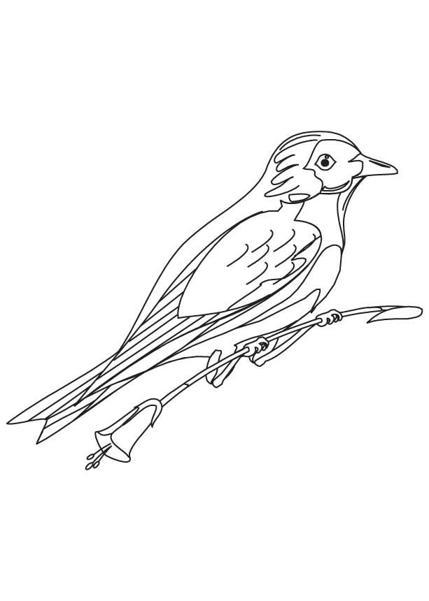 Bluebird Coloring Pages Best Coloring Pages For Kids Bird Coloring Pages Coloring Pages Cartoon Coloring Pages