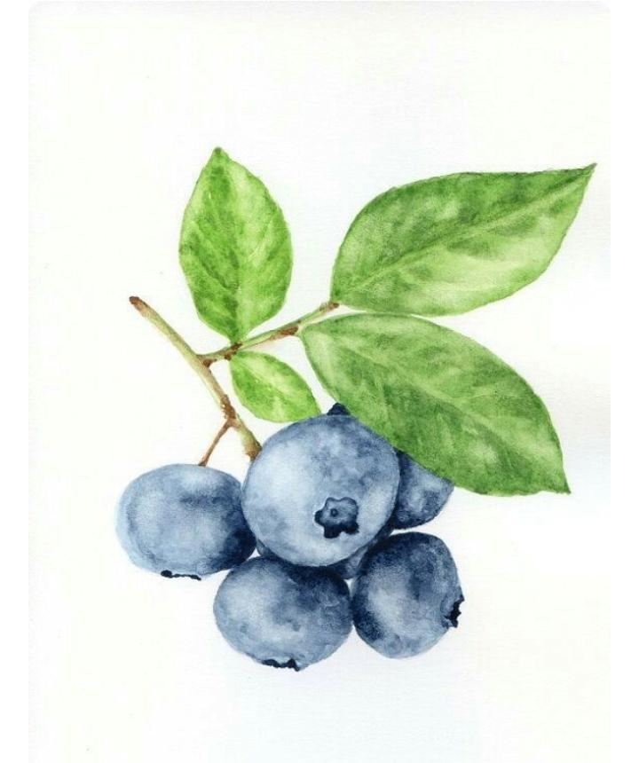 какие-то картинки для рисования голубика рискнем узнать