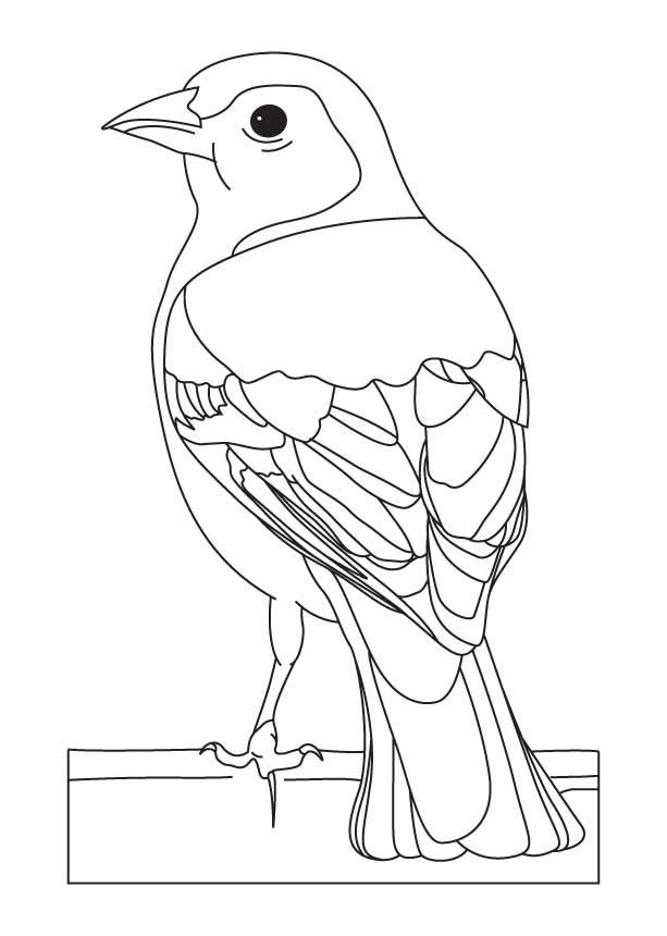 Common chaffinch coloring page