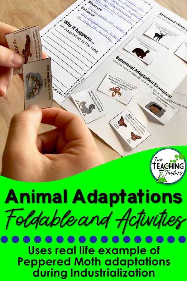Animal Adaptations Interactive Notebook Foldable and Activities Teaching plan