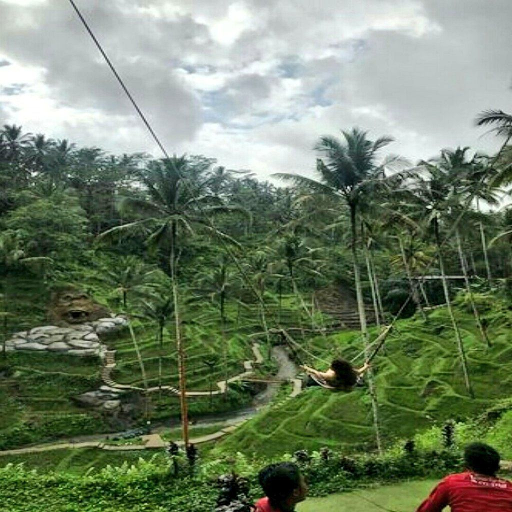 استمتاع في الحقول الرز تيجاللالانج في جزيرة بالي اندونيسيا 6282388926353 سواق في بالي اندونيسيا