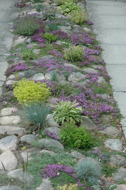 Driveway Strip http://Havetid.blogspot.com: Midsummer-exuberance.