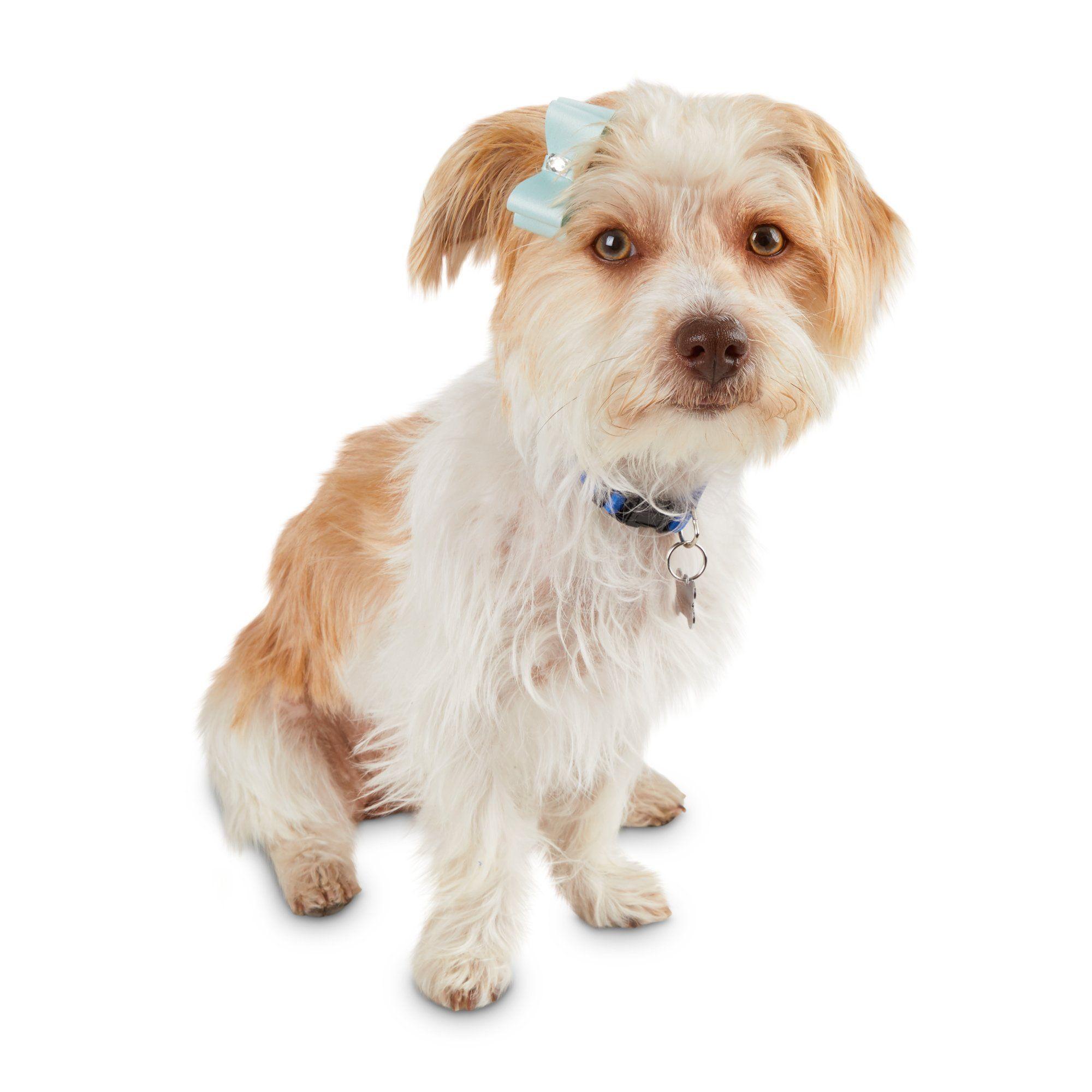 Bond Co Bejeweled Dog Bow Set Pack Of 2 Dog Bows Dogs Live Animals