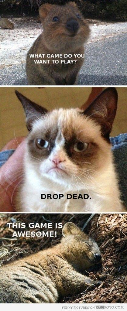 Top 49 Most Funniest Grumpy Cat Quotes