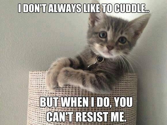 Hahahaha most interesting kitty