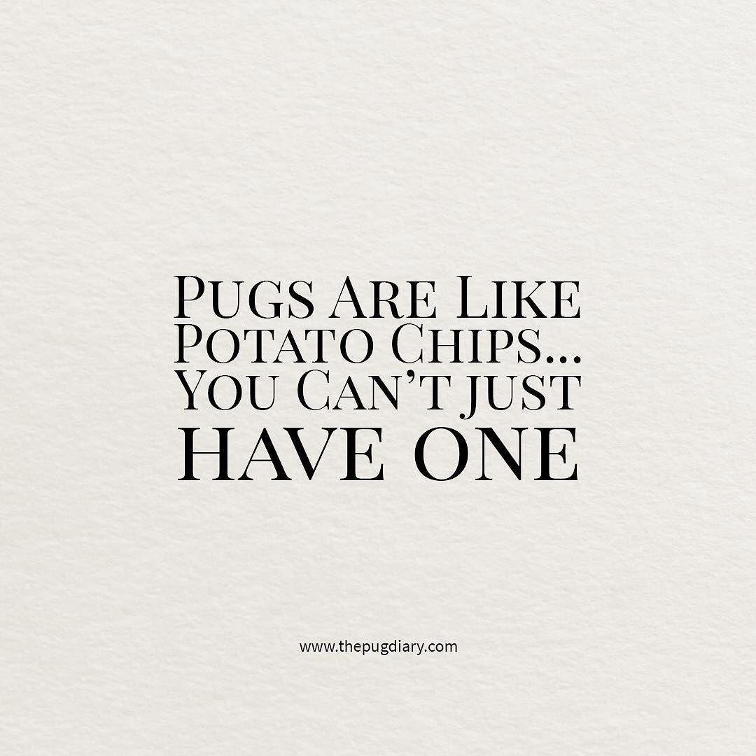 Ain't that so! #thepugdiary