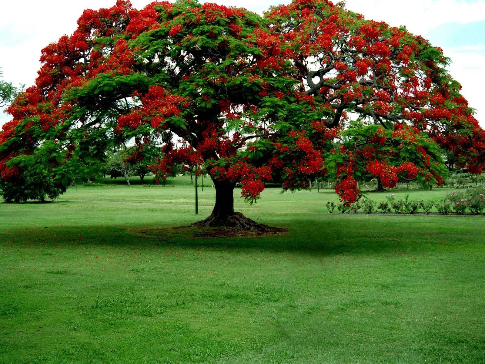 Arşivimden En Güzel Arka Plan Doğa Manzaraları 107 Doğanin Renkleri