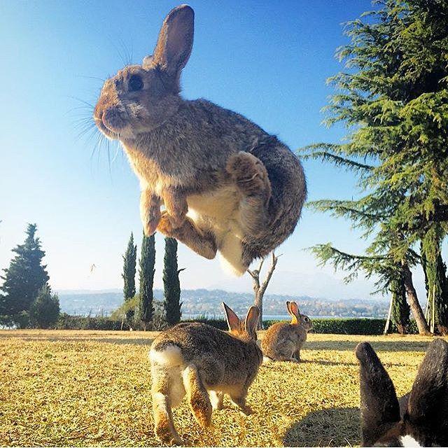 Island of Bunnies!!! By @emmebi420 #insta_animall