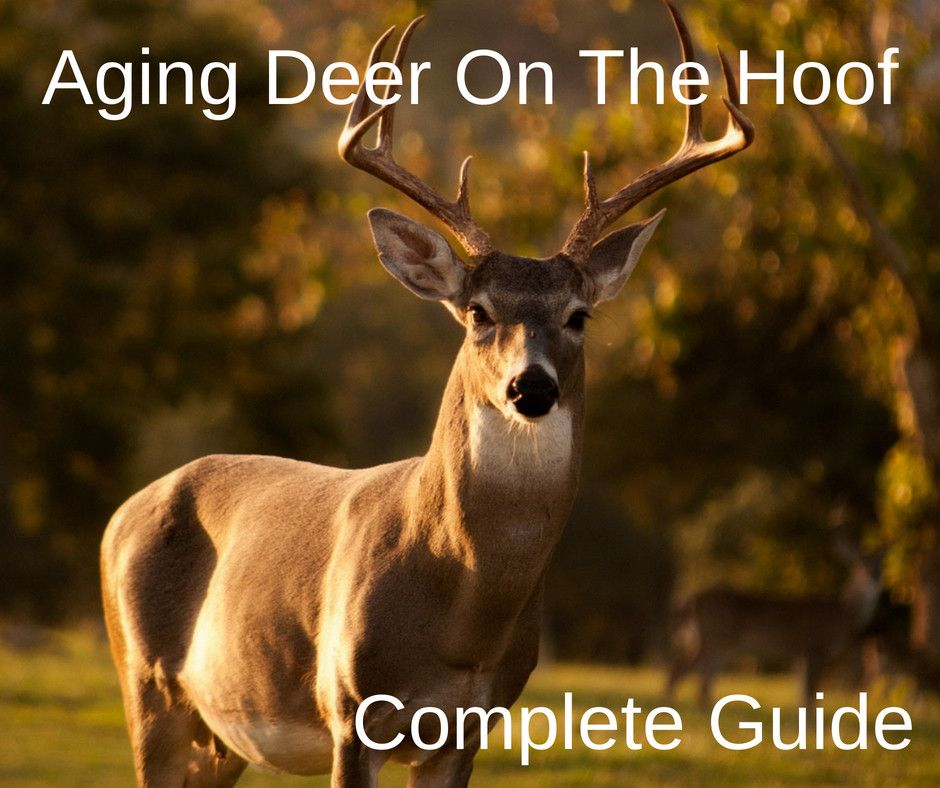 Full Guide To Aging Deer Before You Shoot. agingdeer