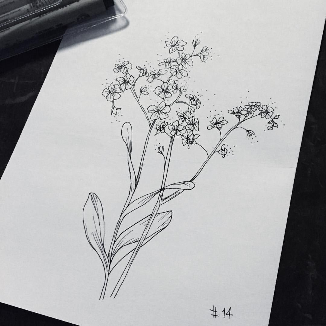 Forget Me Not Flower Tattoo Black And White Www Imgkid