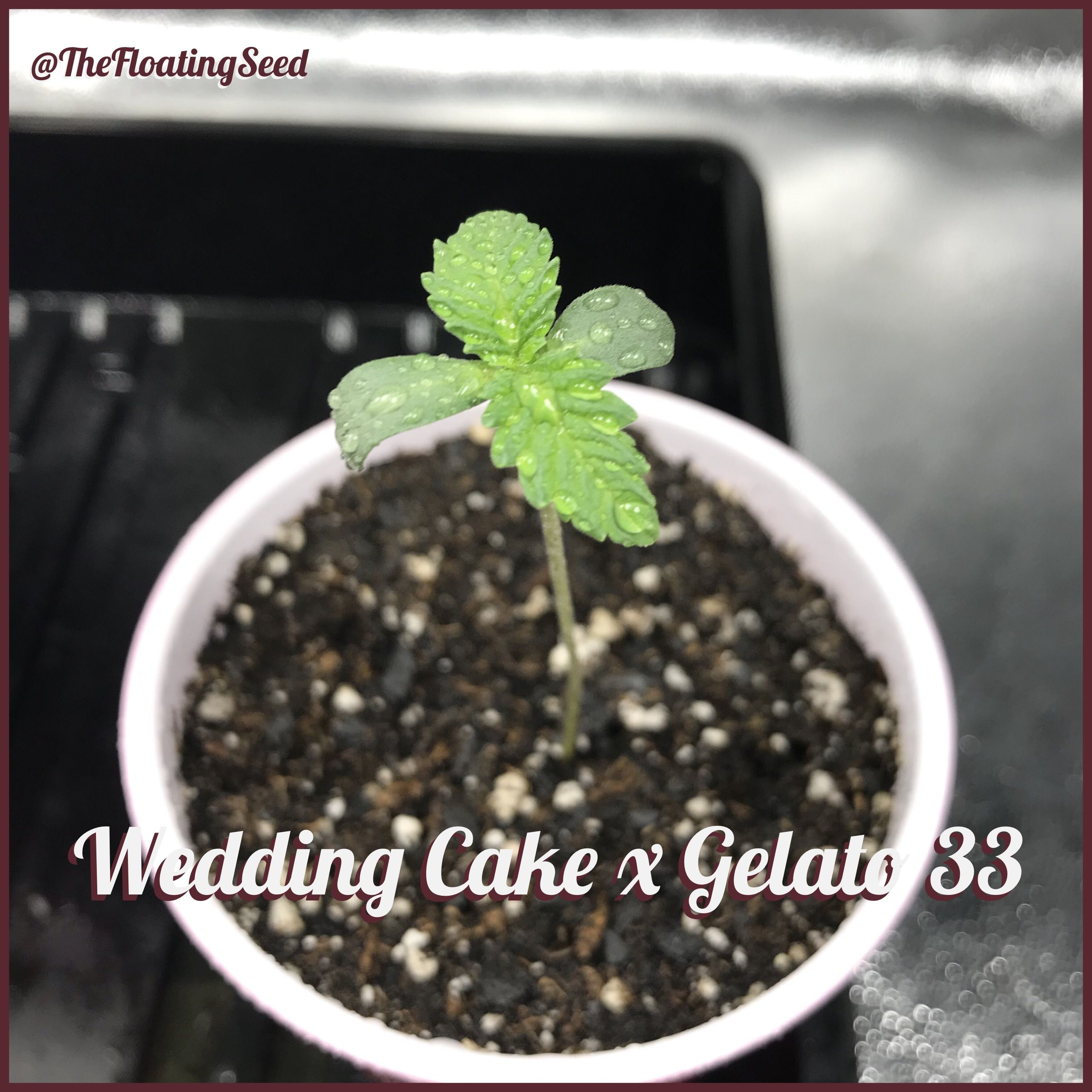 Pin By The Floating Seed On Wedding Cake X Gelato 33 Wedding Cakes