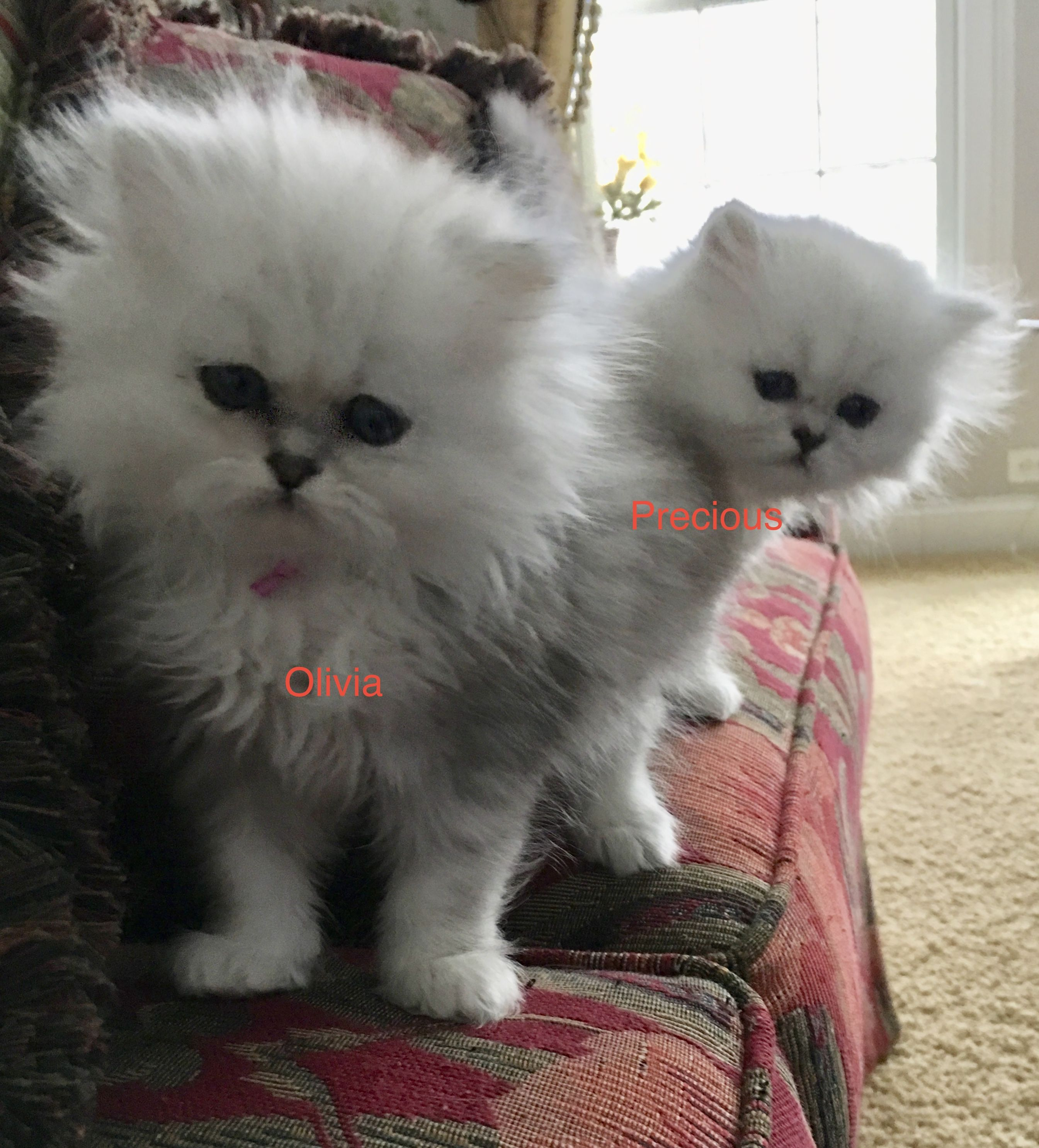 Looking for our new mommy. readytosnuggle friendlykitty