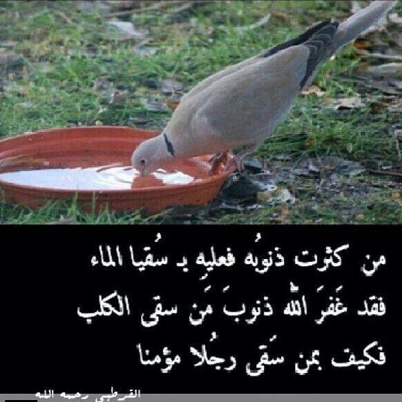 سقيا الماء Beautiful Words Arabic Quotes Words