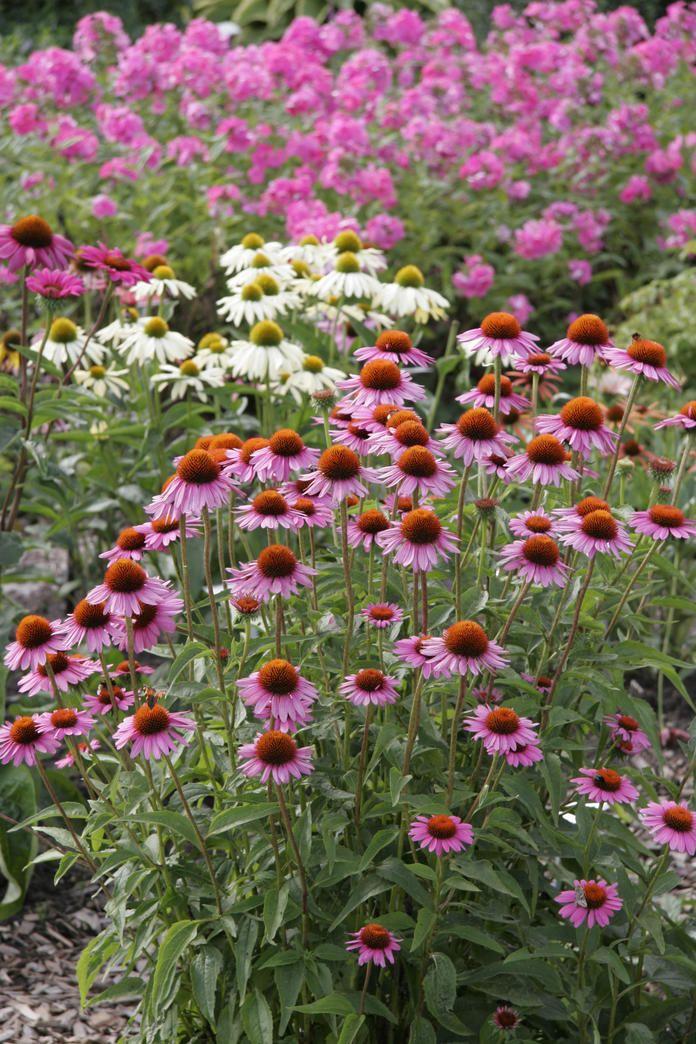 Den Garten pflegeleicht gestalten  Zuknftige Projekte