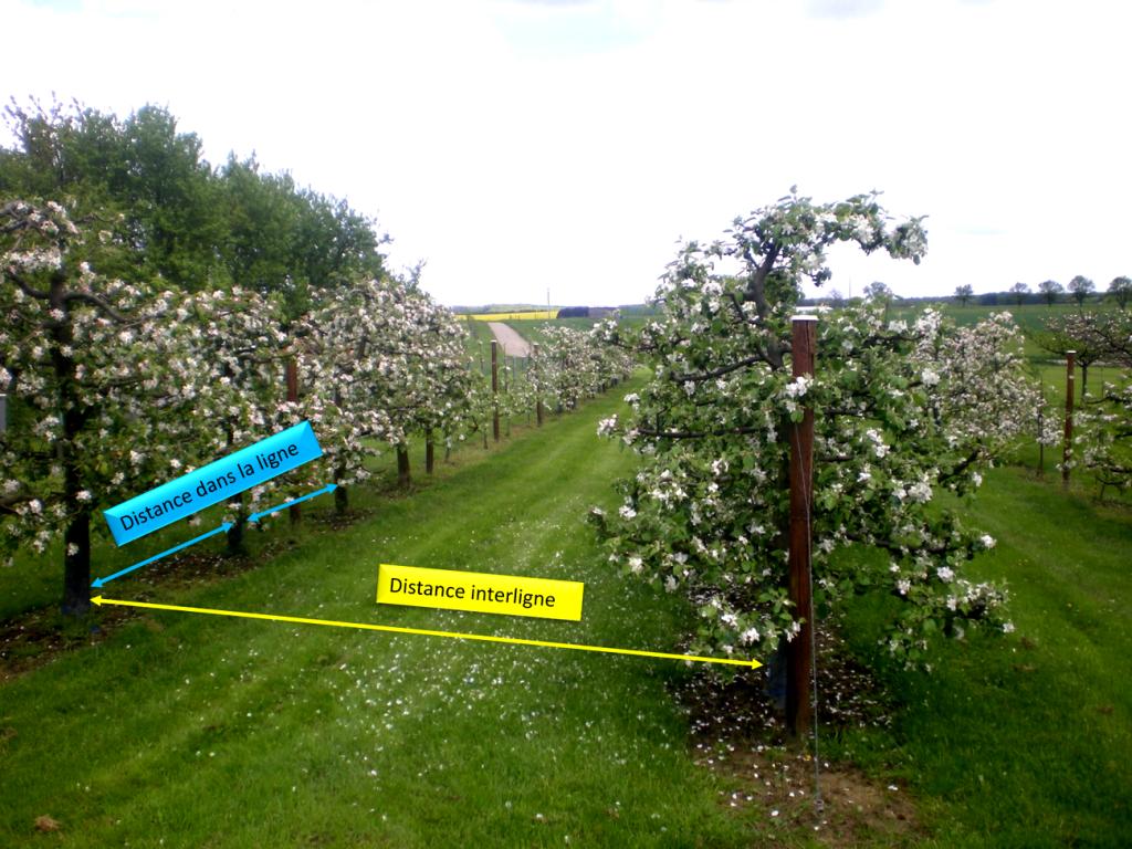 Distance de plantation d 39 une haie fruiti re de scions verger pinterest fruitier haies et - Distance plantation arbre maison ...
