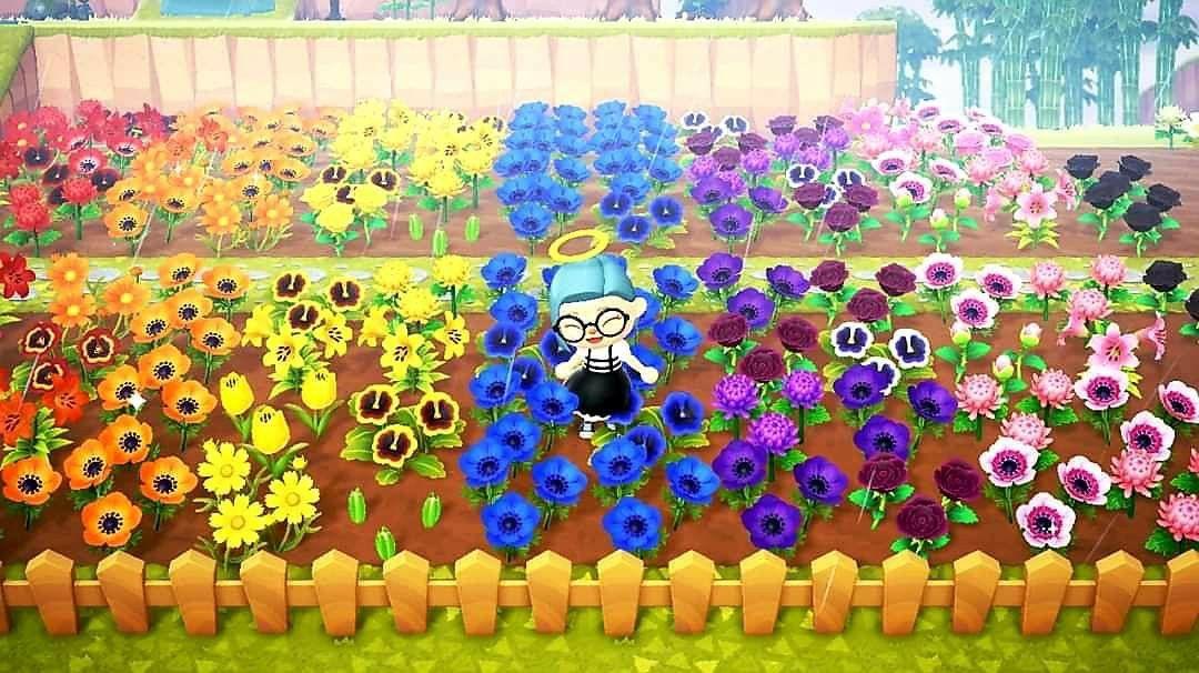 Garden inspo | Animal crossing villagers, Rainbow garden ...