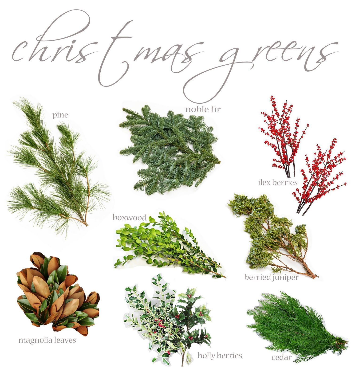 Christmas greens | Foliage, greenery and berries | Pinterest ...