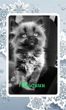 Mignon petit chat_mplkjh2358390758 (198 pieces)