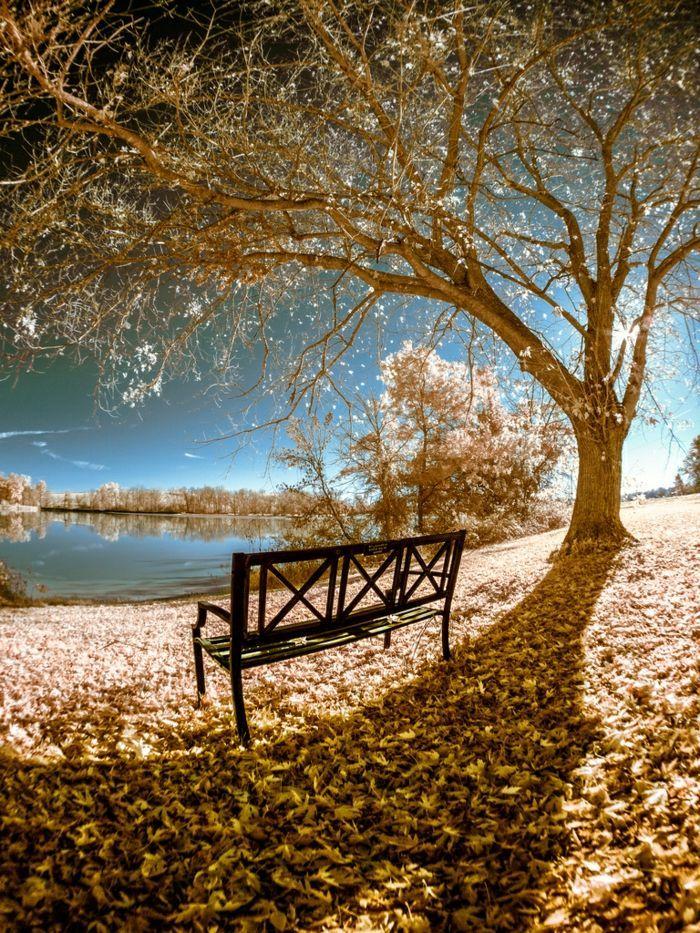 imagenes de paisajes naturales, suelo lleno de hojas de diferentes colores, arbol haciendo sombra al banco