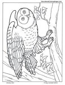Baby Owl Coloring Pages Bing Images Owl Coloring Pages Animal Coloring Pages Coloring Pages