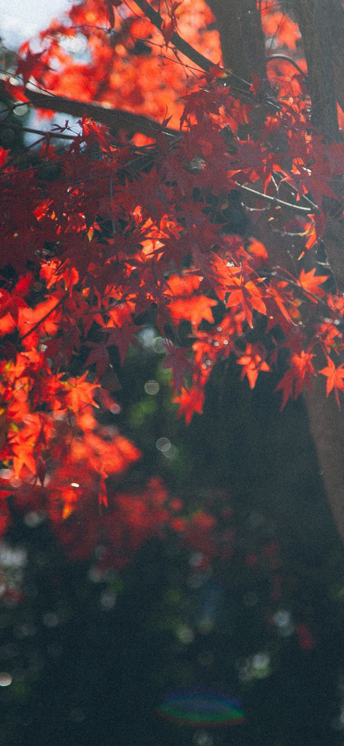 Fall Tree Autumn Nature iPhone X wallpaper in 2019