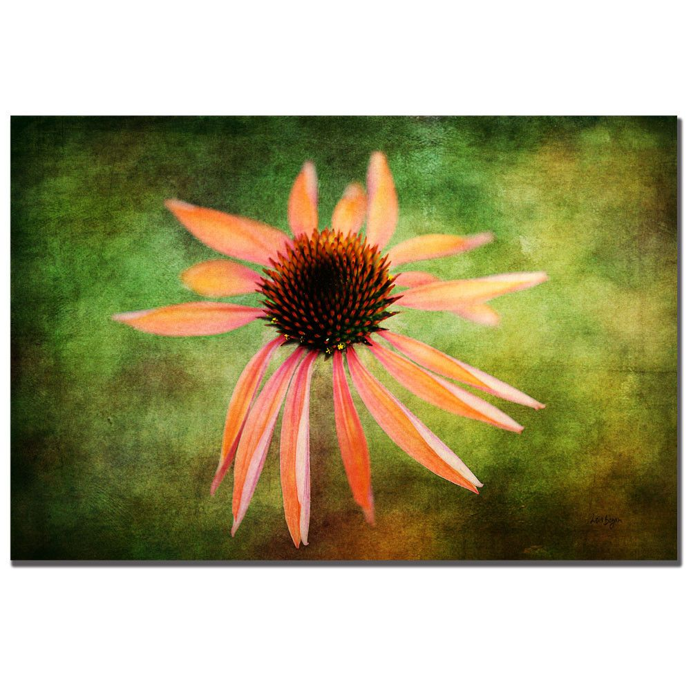 'Textured Golden Coneflower' by Lois Bryan Photographic Print on Canvas
