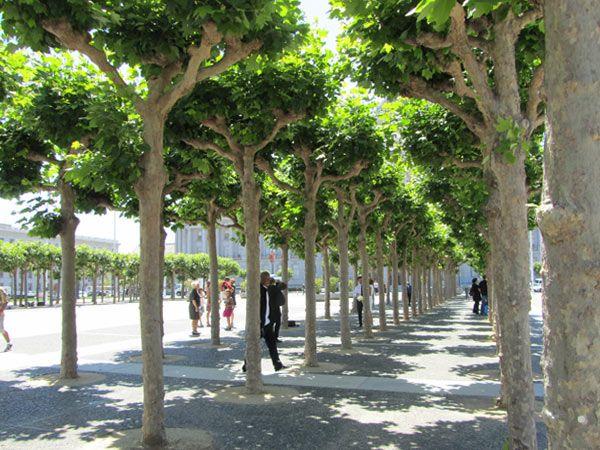Civic center plaza san francisco the cultural for San francisco landscape